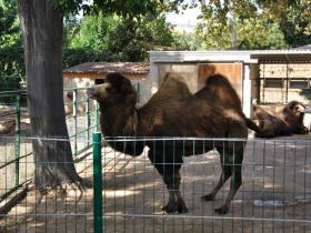 Зоопарк Барселоны (18)