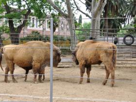 Зоопарк Барселоны (11)