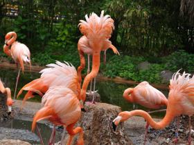 Зоопарк Барселоны (5)
