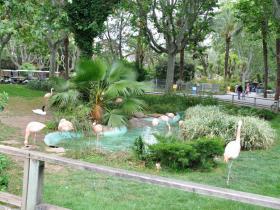 Зоопарк Барселоны (10)