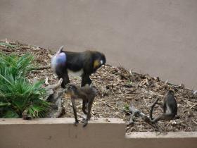 Зоопарк Барселоны (8)