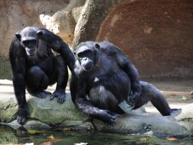 Зоопарк Барселоны (21)