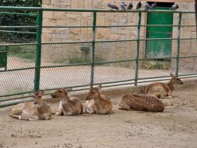 Зоопарк Барселоны (3)