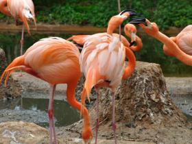 Зоопарк Барселоны (7)