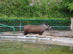 Зоопарк Барселоны (14)
