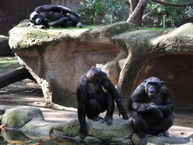 Зоопарк Барселоны (17)